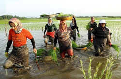 مقاله نقش زنان روستایی در  اقتصاد روستا
