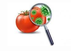 پاورپوینت بررسی آلودگی های محیطی در مواد غذائی